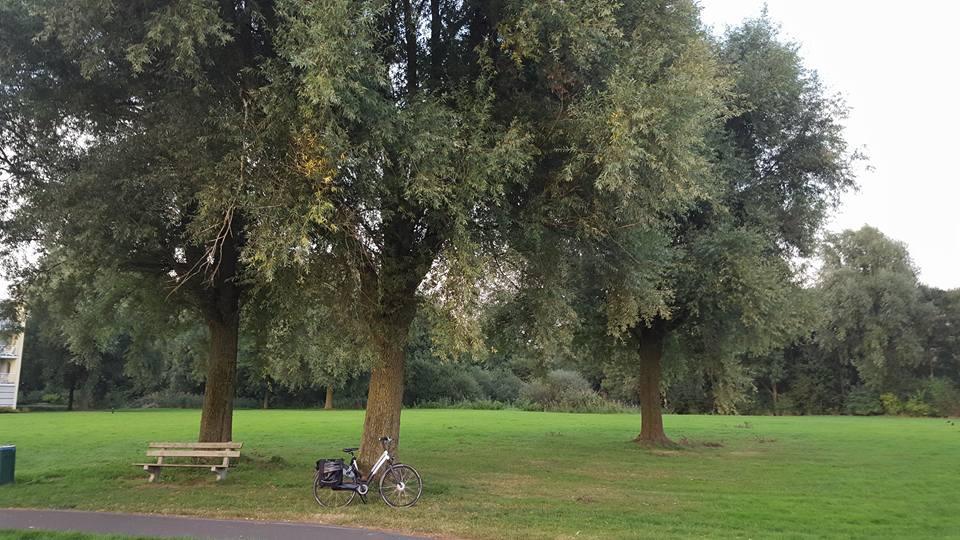 Hampshire hotel – Hoornsemeer subsidie voor kap van 250 bomen