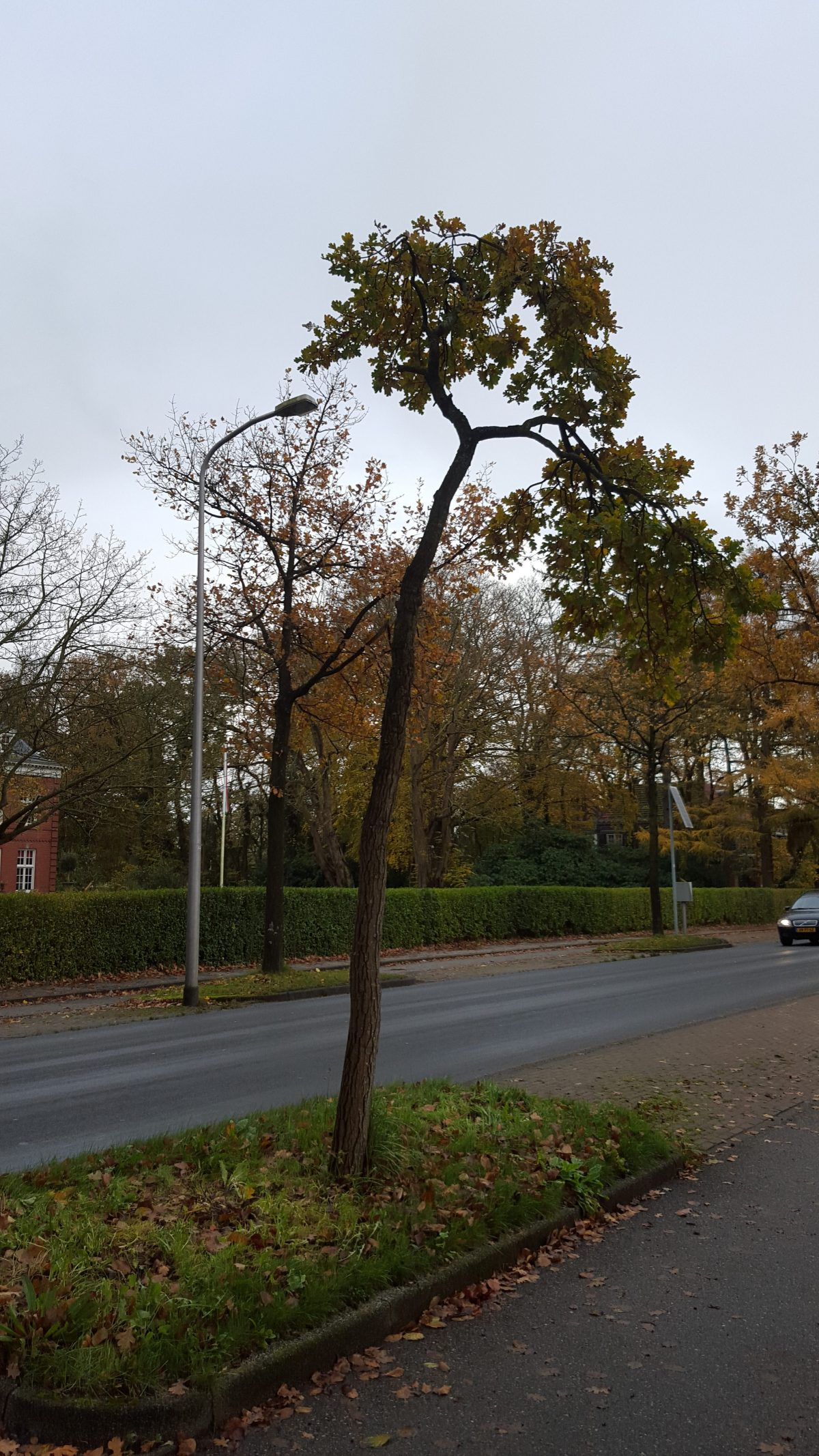 Voorbeeld bezwaarbrief tegen huidige boomonderhoudsmethoden in Groningen