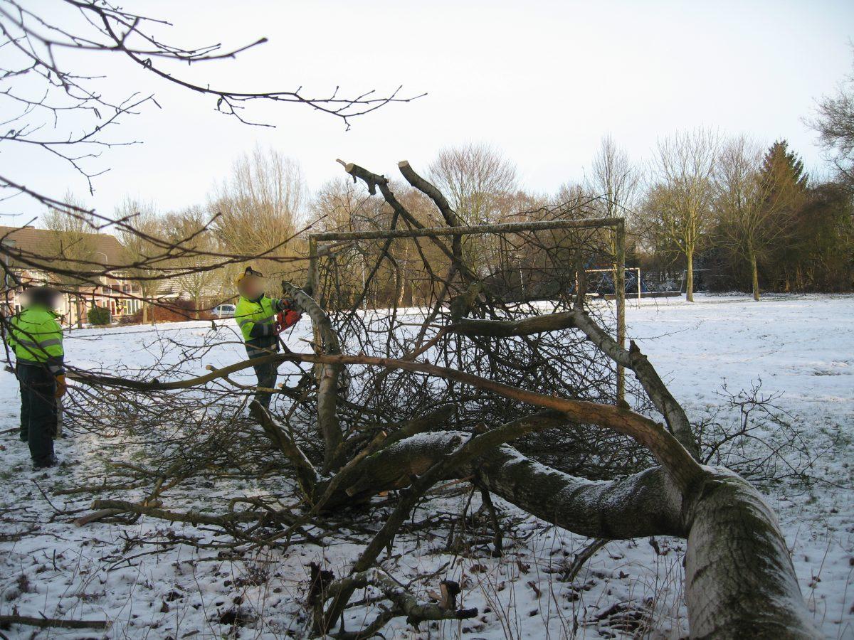 Harens Groenbeleid – Van de Groene Parel tot Bomen als Verdienmodel
