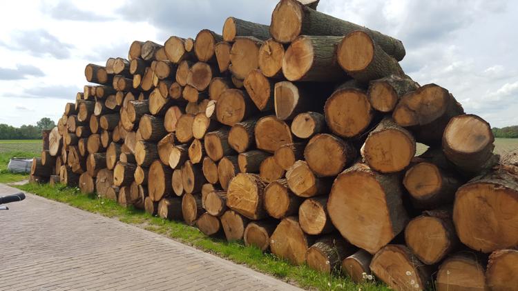 EU voor de rechter gesleept voor steun aan biomassa als ´hernieuwbare energie'