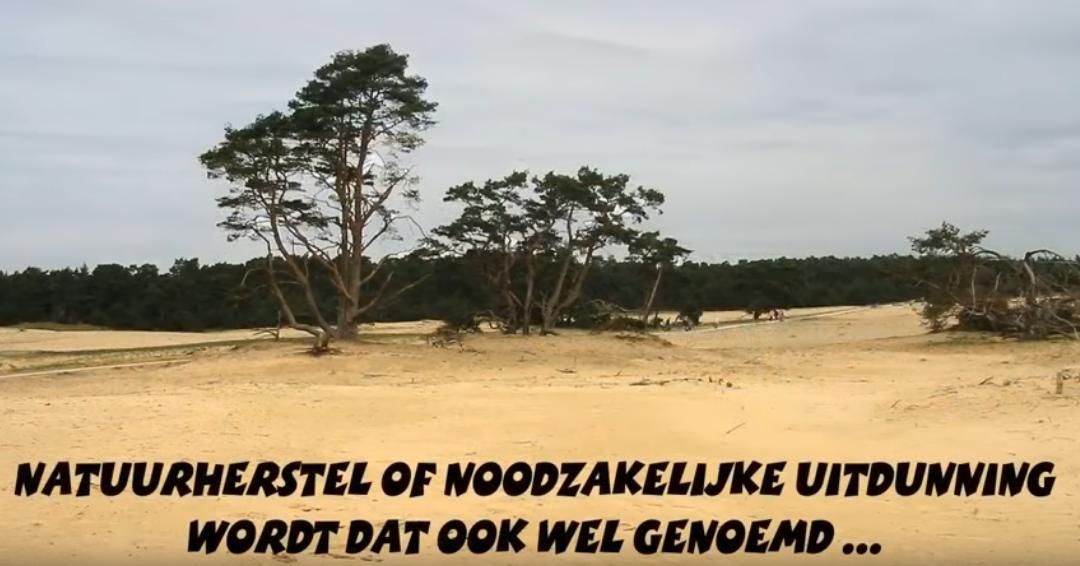 """Film """"Stop Houtkap Bossen"""" over de corruptie van het biomassabeleid in Nederland"""