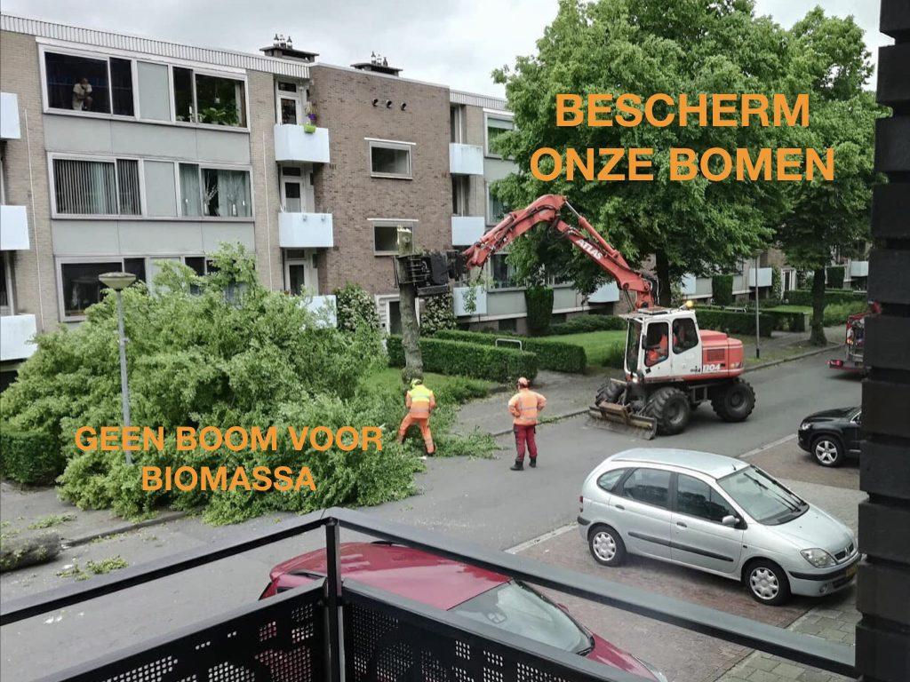 Boomwachters Groningen bescherm onze bomen