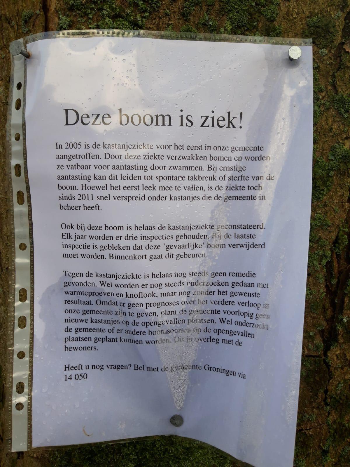 Doet de gemeente er wel alles aan om kastanjebomen te genezen van de kastanjebloedingsziekte?