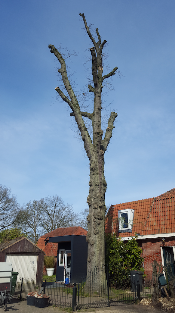 Pruning to Kill: Tree care in the time of the COVID-19 virus
