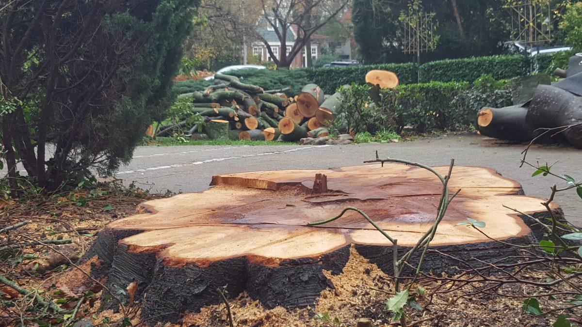 Vragen voor de Raad –  Politieke woensdag (25 nov 2020) – inzake  Beleidsregels APVG Vellen van een houtsopstand