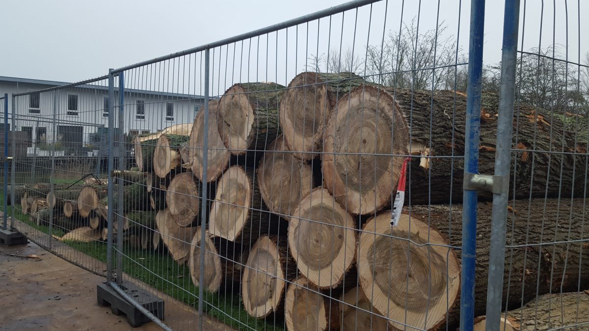 Opnieuw bomenkap in Lewenborg – 99 bomen aan de Lichtboei en Stuurboordswal