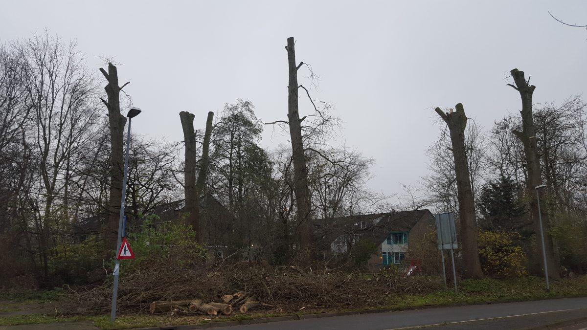 Bewoners in Lewenborg geschokt over bomenkap