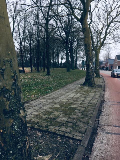 Kap 19 gezonde plantanen in Winschoten